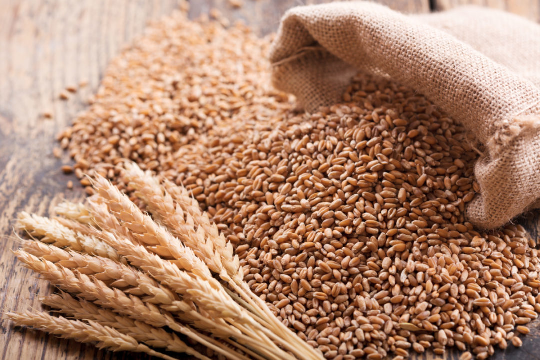 healthy benefit of Wheat