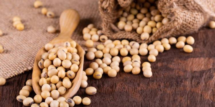 Health Benefits of eating Soybean to your immune system