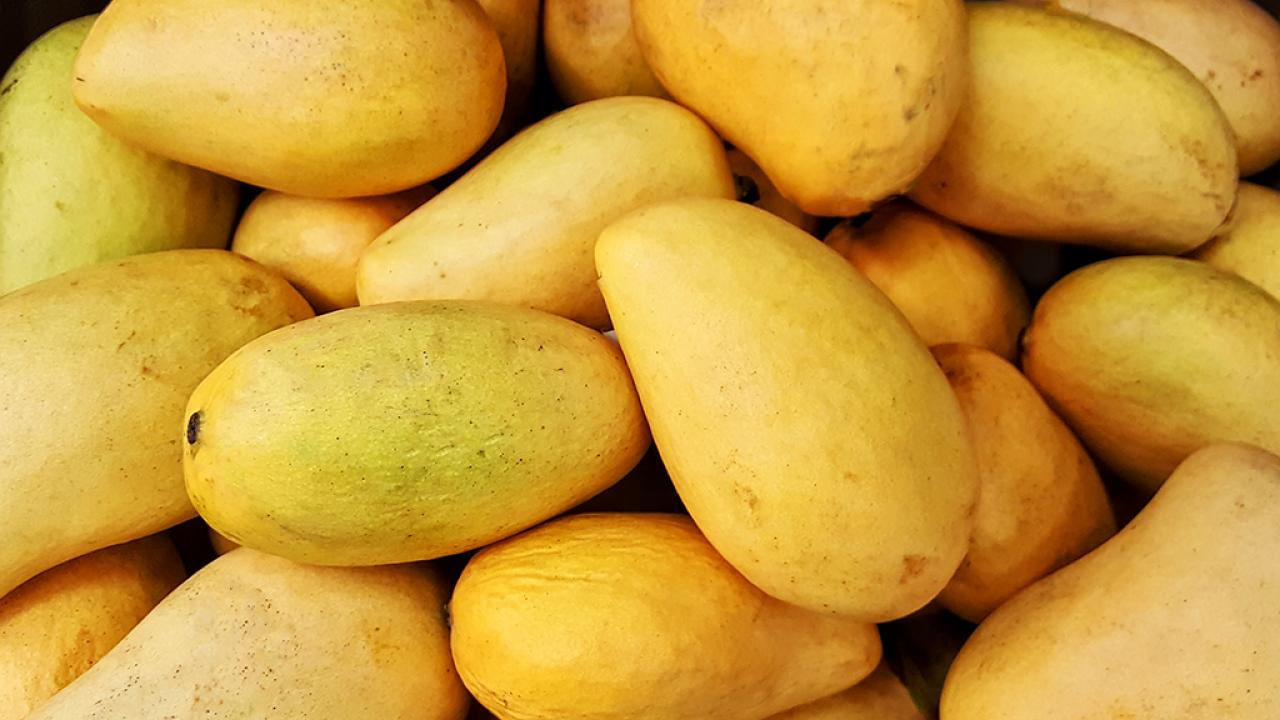 Healthy Benefits Of Mango
